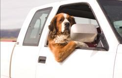 Sa psom u inostranstvo – kakva je procedura?